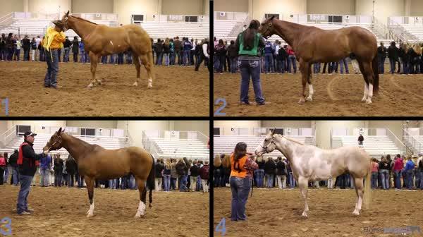 2015 2015 San Antonio Livestock Exposition