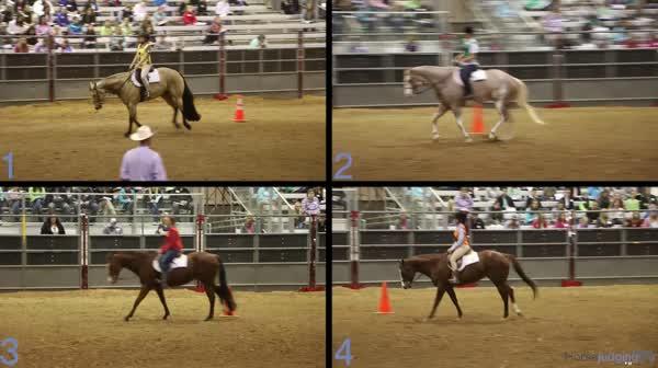 2016 2016 San Antonio Horse Judging