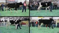 2018 2018 San Antonio Dairy