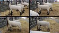 2018 2018 San Antonio Livestock Show