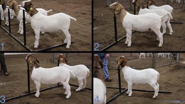 2019 North Carolina State Livestock CDE