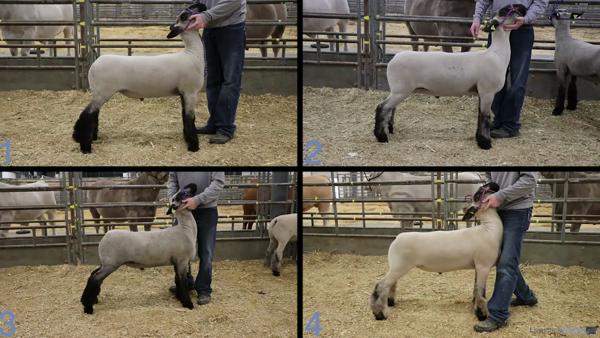 2020 San Antonio Livestock